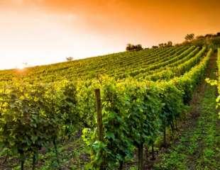 Vino: non dissipiamo patrimonio pugliese
